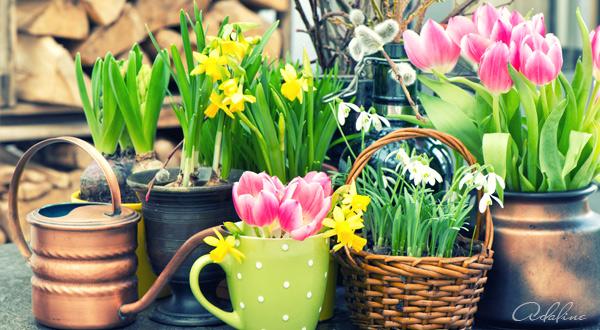 Zive-kvety