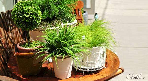 Magické-vlastnosti-domácích-rostlin